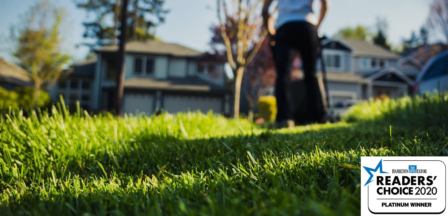 Taylor Lawn Care - Lawn and Grass Cutting in Hamilton